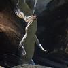 Philippines Crocodile