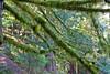 Moss on a tree shot while hiking up Neahkahnie Mountain on the northern Oregon Coast.