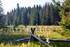 A meadow on Mt Hood