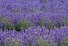 """<a href=""""http://www.woodlandlavender.com/"""">Woodland Lavender Farm</a>"""