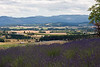 "The view across the Yamhill Valley from <a href=""http://www.woodlandlavender.com/"">Woodland Lavender Farm</a>"