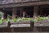 "<a href=""http://www.butchartgardens.com"">Butchart Gardens</a>  Photo by Dennis"