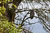 "An owl at <a href=""http://www.fws.gov/ridgefieldrefuges/ridgefield/index.html"">Ridgefield National Wildlife Refuge</a>"