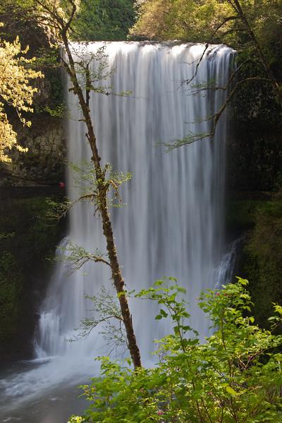 "Lower South Falls <a href=""http://www.oregon.com/hiking/silver_falls.cfm"">Silver Falls State Park</a>"