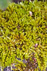 I liked the texture of this moss.