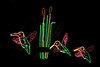 "<a href=""http://www.oregonzoo.org/Events/ZooLights/index.htm"">Zoo Lights!</a> Hummingbirds at the Oregon zoo."