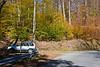 Beech trees in full color near Wellsboro, Pennsylvania