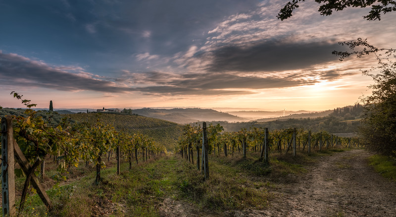 Sunrise on Tuscany Winefields HDR Panorama