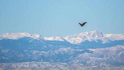123119-Eagles-003