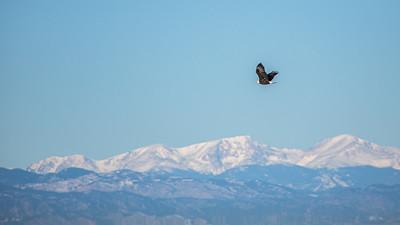 123119-Eagles-001