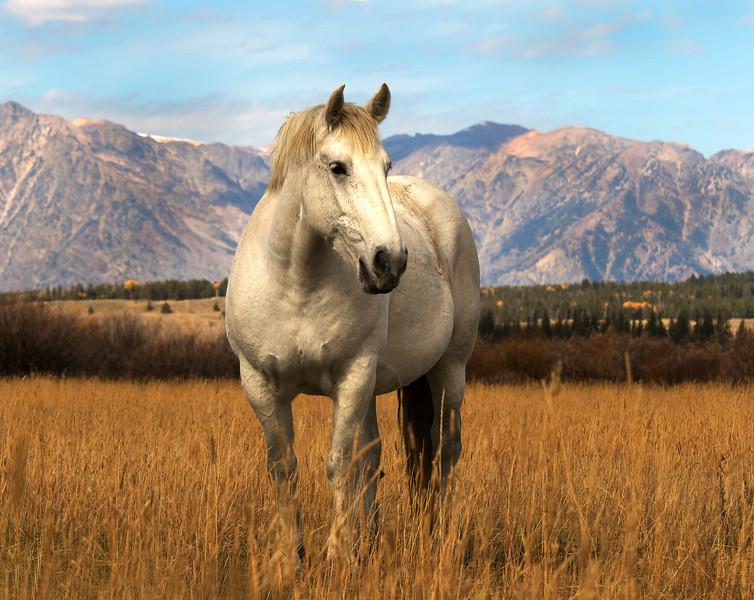 White Horse-Teton Range