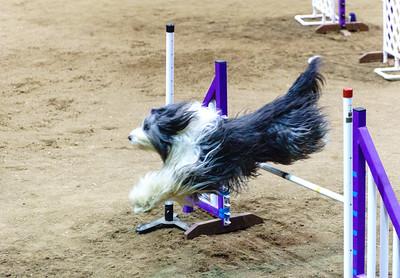 Denver Dog Show 2.15.15