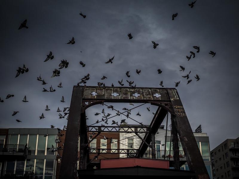 Birds in an induced flight II, Confluence Park, Denver, CO