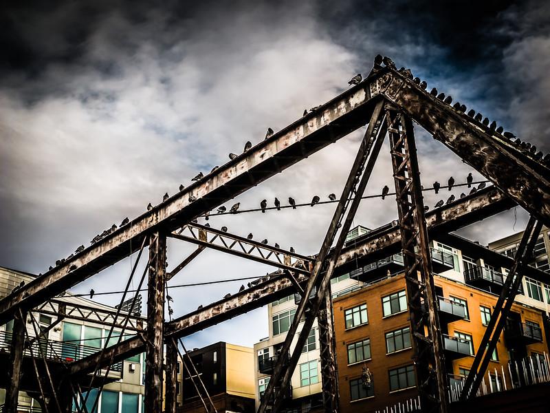 Birds on a wire (and a bridge), Confluence Park, Denver, CO