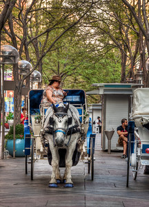 mall-horse-carriage-1