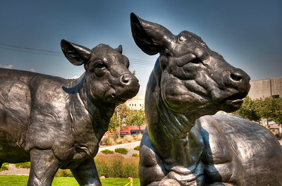 cattle-statue-1