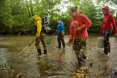 David Christiansen's Aquatic Biology class surveys fish in the Munn Brook in Westfield