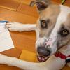 seattle-wa-dogs-adoptable-cute-animals