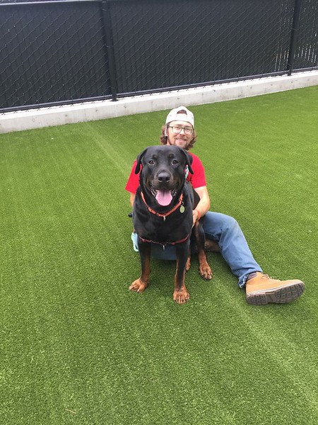Severus, a giant lap dog, enjoying snuggle time with volunteer Brad