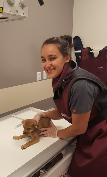 Veterinary Assistant, Desiree, assisting with the first ever X-ray