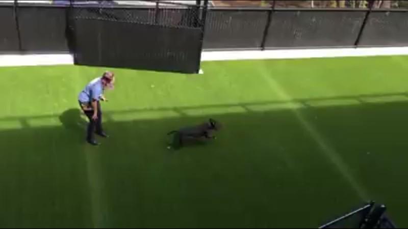 Nala enjoying an off leash run in the exercise yard