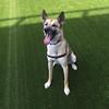Juno enjoying the exercise yard