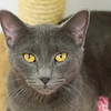 #6 - Yoda - found fending for herself as a stray