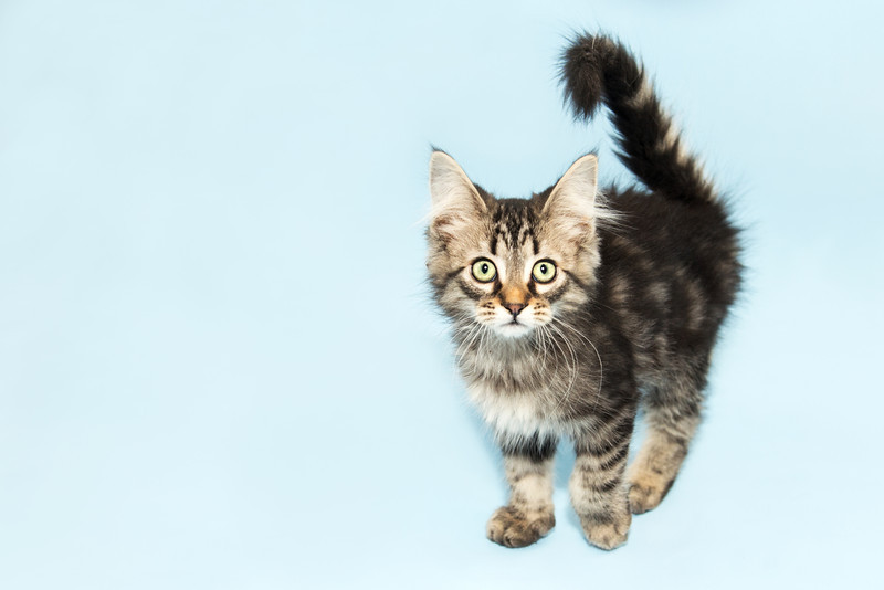#14 Minnetonka, a 2-month-old kitten, transferred in through Life-Saver Rescue Program