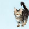 #14 Minnetonka, a 2-month-old kitten, transferred in through Life-Saver Rescue Program
