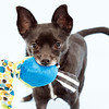 #2 - Teddy - paralyzed from spinal injury and recovered after 6 months of physical therapy
