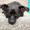 #4 - Jim- transferred from other shelter where he ran out of time