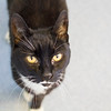 #7 Lil' M - FIV+, partially blind senior kitty adopted by mother who is a nurse with a special needs son