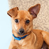 #3 - Tater - transferred from other shelter where he ran out of time