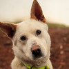 Grizzley A22235503-1