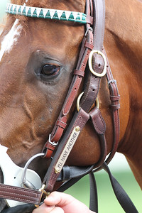 Close-up of name plate on I'll Have Another's halter