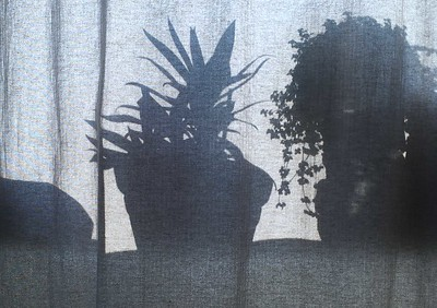 "Silhouette.. "" Mind your own business"" (plant!)."