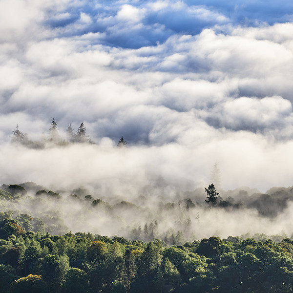Mist Clearing