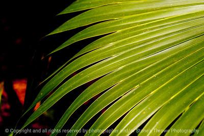 015-leaf-dsm-05jul12-003-7209