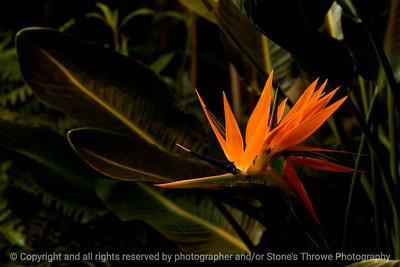 015-flower-dsm-03feb17-18x12-003-7502