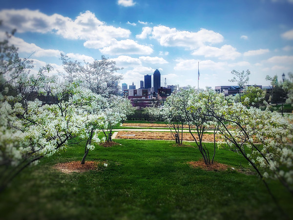 Blooming in Des Moines