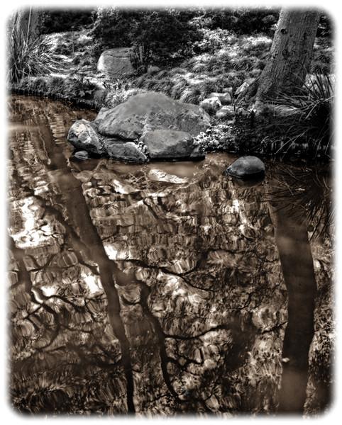 Descanso Gardens, Image #3