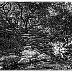 Descanso Gardens, Image #5