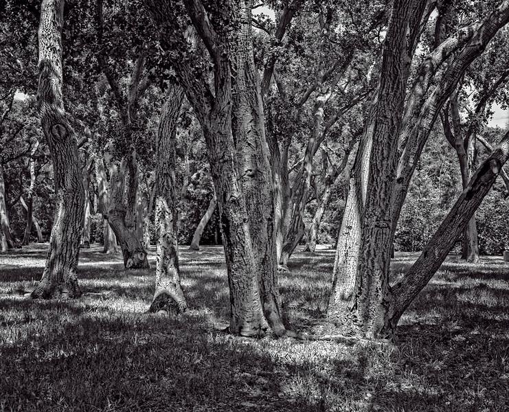 Grove of Tree