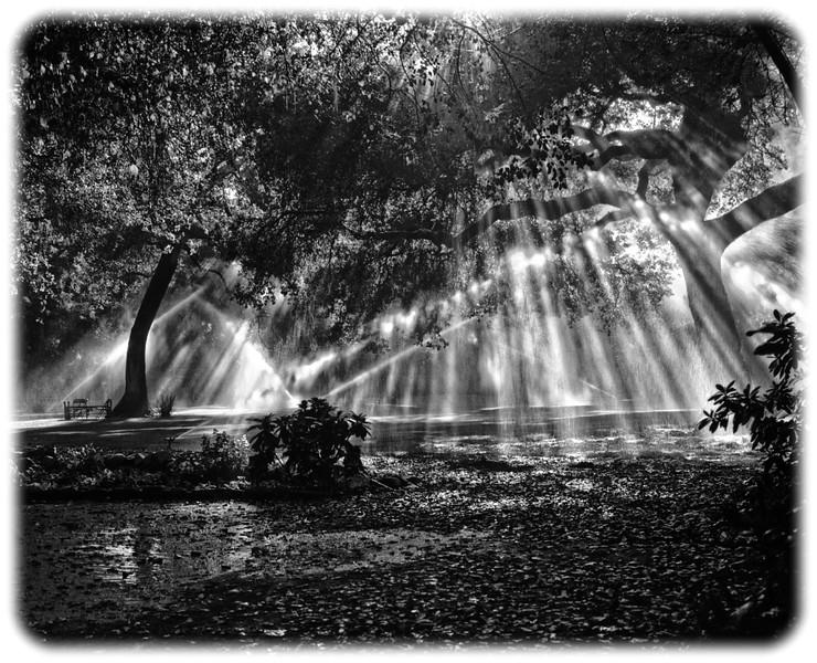 Descanso Gardens, Image #6