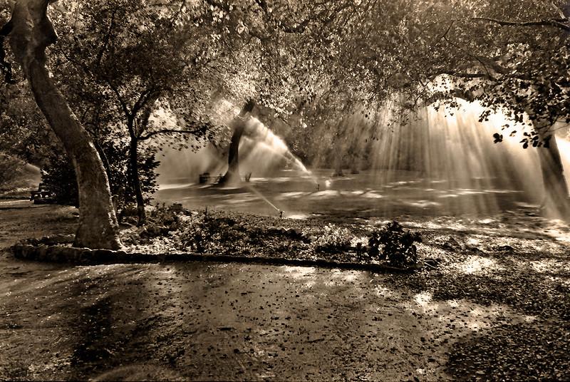 Trees, Pools of Light, Watering Sprinklers