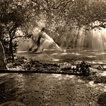 Trees, Pools of Light, Watering Sprinklers