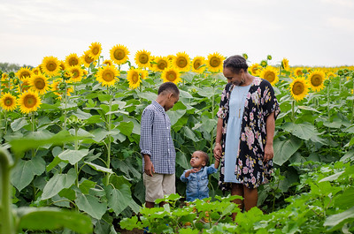 SuzysSnapshots_Sunflowers_Brittany-6162