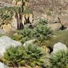 Plam oasis