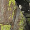 Pretty lichen