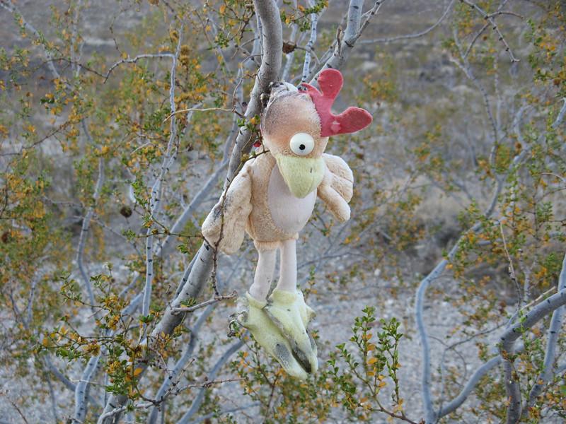 hahahaha - super chicken still hangs in the same spot Sooz left him at on New Year's 2008